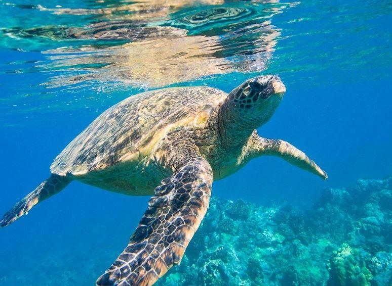 地域ブログの輪『ダイビングライフ』沖縄