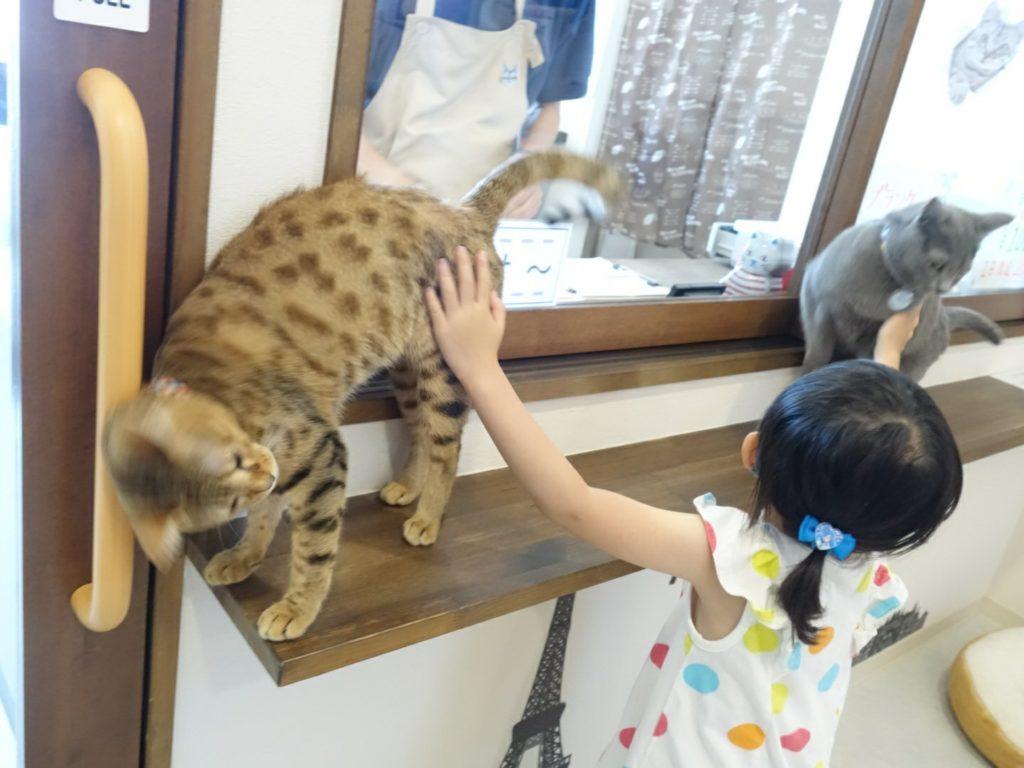 猫カフェが高岡市北島にオープン!【もふもふかん】で癒されてきた!