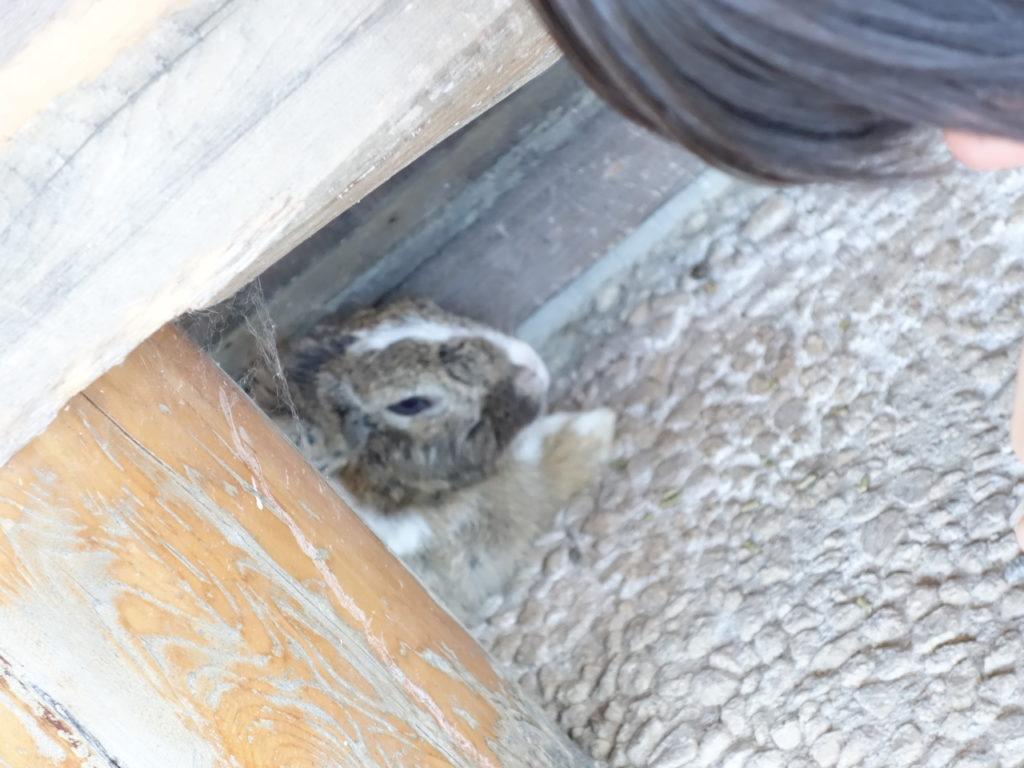【月うさぎの里 加賀兎郷】でランチを食べてウサギと触れ合おう!(口コミブログ)